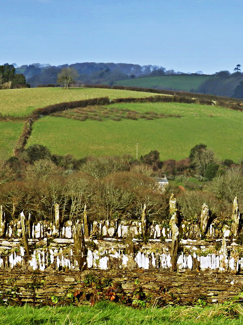 Looking across the green fields from Trelissick, Cornwall