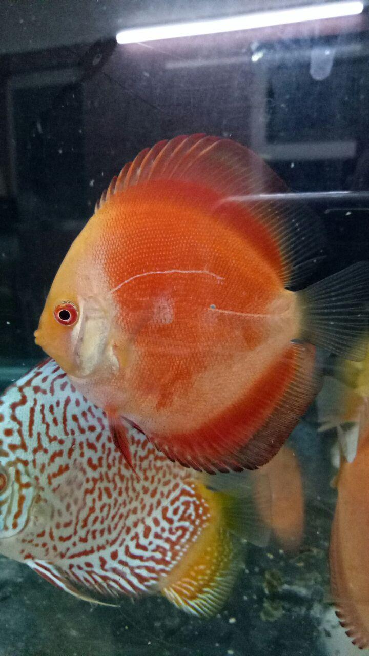 JOE\'S AQUAWORLD FOR EXOTIC FISHES MUMBAI INDIA 9833898901: aquarium ...