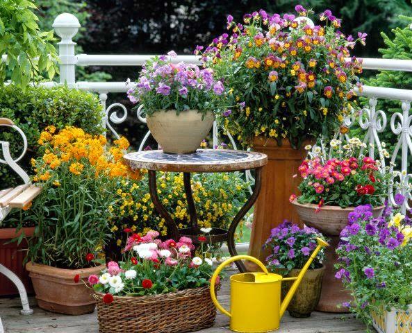 Gardening in backyard patio on Garden And Patio Ideas id=45450