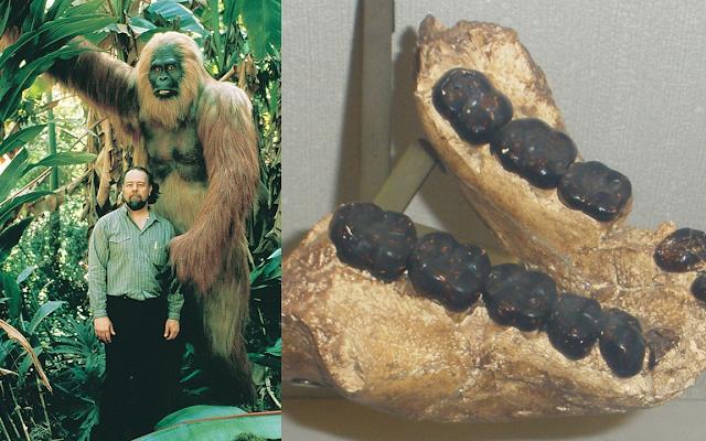 gigantopithecus giant ape prehistoric human