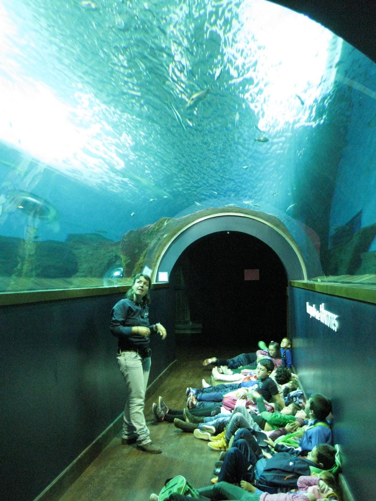 Mi bibliorinc n excursi n al acuario de sevilla - Entradas acuario sevilla ...