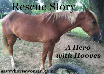 Rescue Story –  A Hero with Hooves