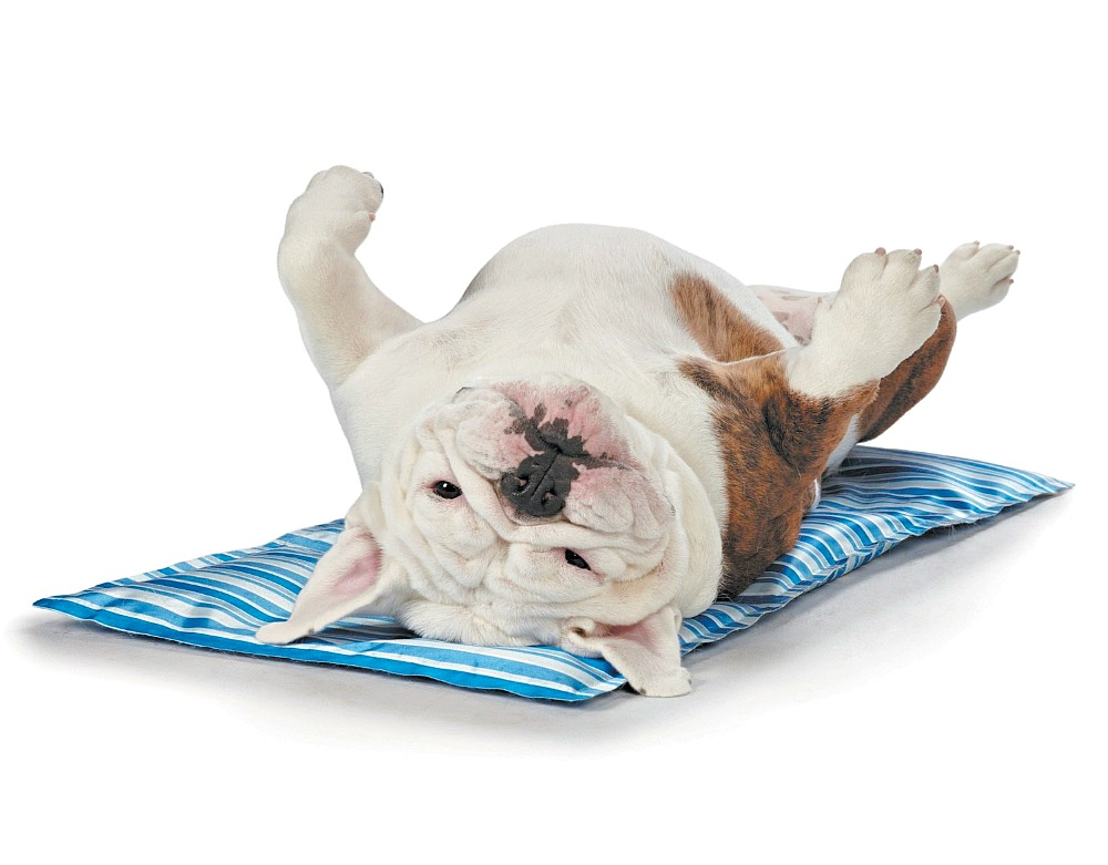 A Cooling Bed for Dogs | How to Keep a Dog Cool in the Summer (www.danslelakehouse.com)