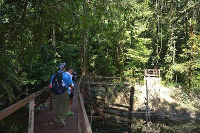 Menyusuri jembatan kayu di Mulu National Park