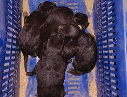 Έκκληση για 5 νεογέννητα κουτάβια στο Άργος