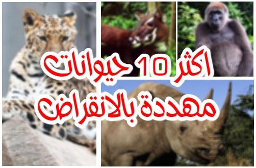 اكثر 10 حيوانات مهددة بالانقراض بشكل كبير