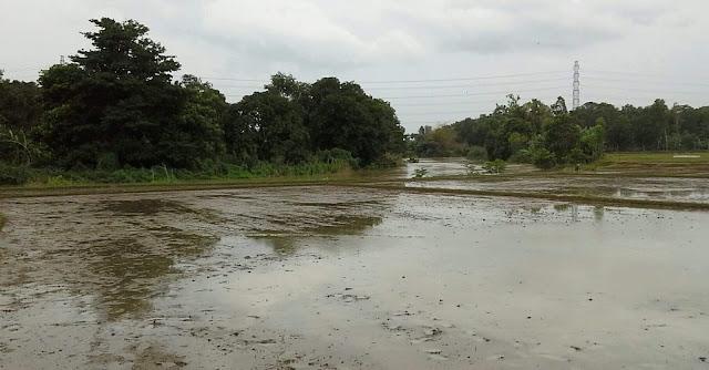 Sungai ciasem, subang meluap dan banjir