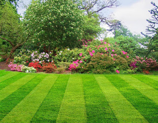 5 Steps To A Better Lawn And Garden