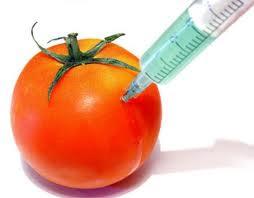 Βόμβα για τα γενετικά τροποποιημένα – Συνδέονται με όγκους
