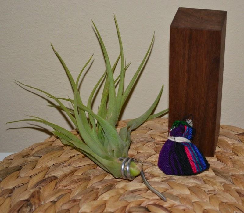 yvonne sandra evrgreen pflanze dich gl cklich. Black Bedroom Furniture Sets. Home Design Ideas