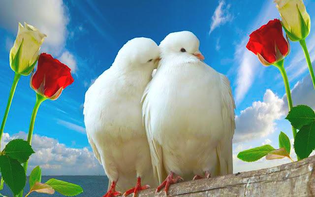 rubén sada, poema amor, romántico, palabras de amor, ahora que volviste, palomas,