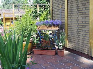 terrassengestaltung mit k belpflanzen gartenelfe. Black Bedroom Furniture Sets. Home Design Ideas