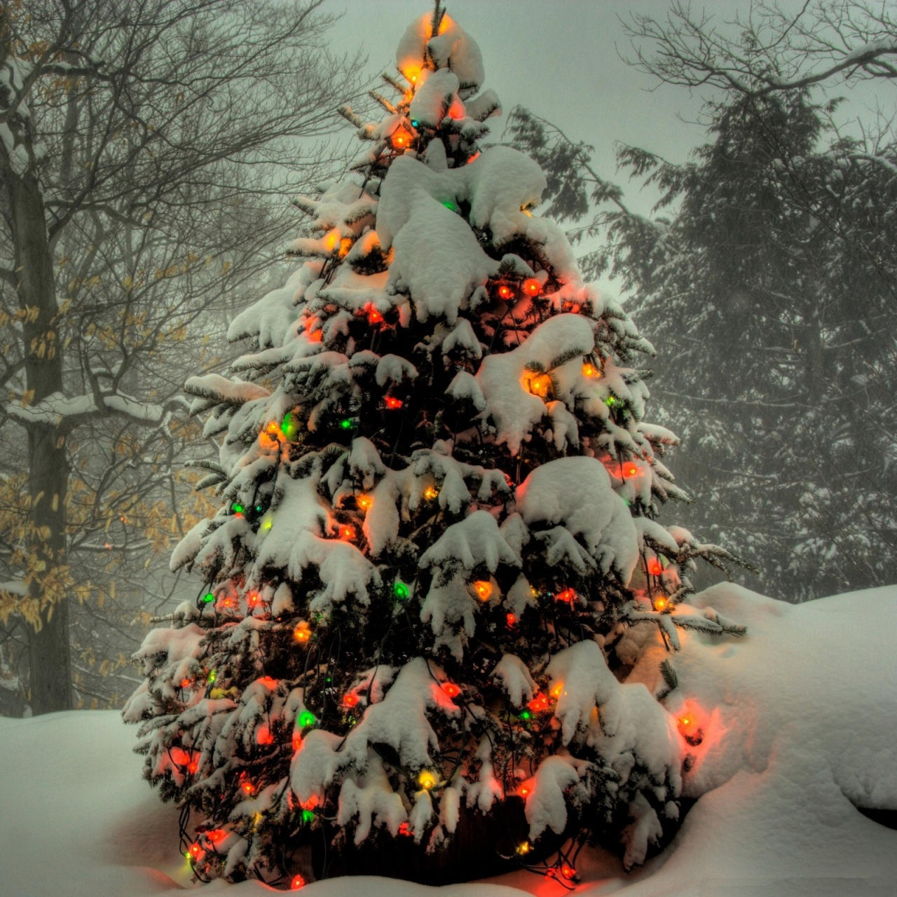 Chistmas Trees: PicturesPool: XMas Tree Wallpapers