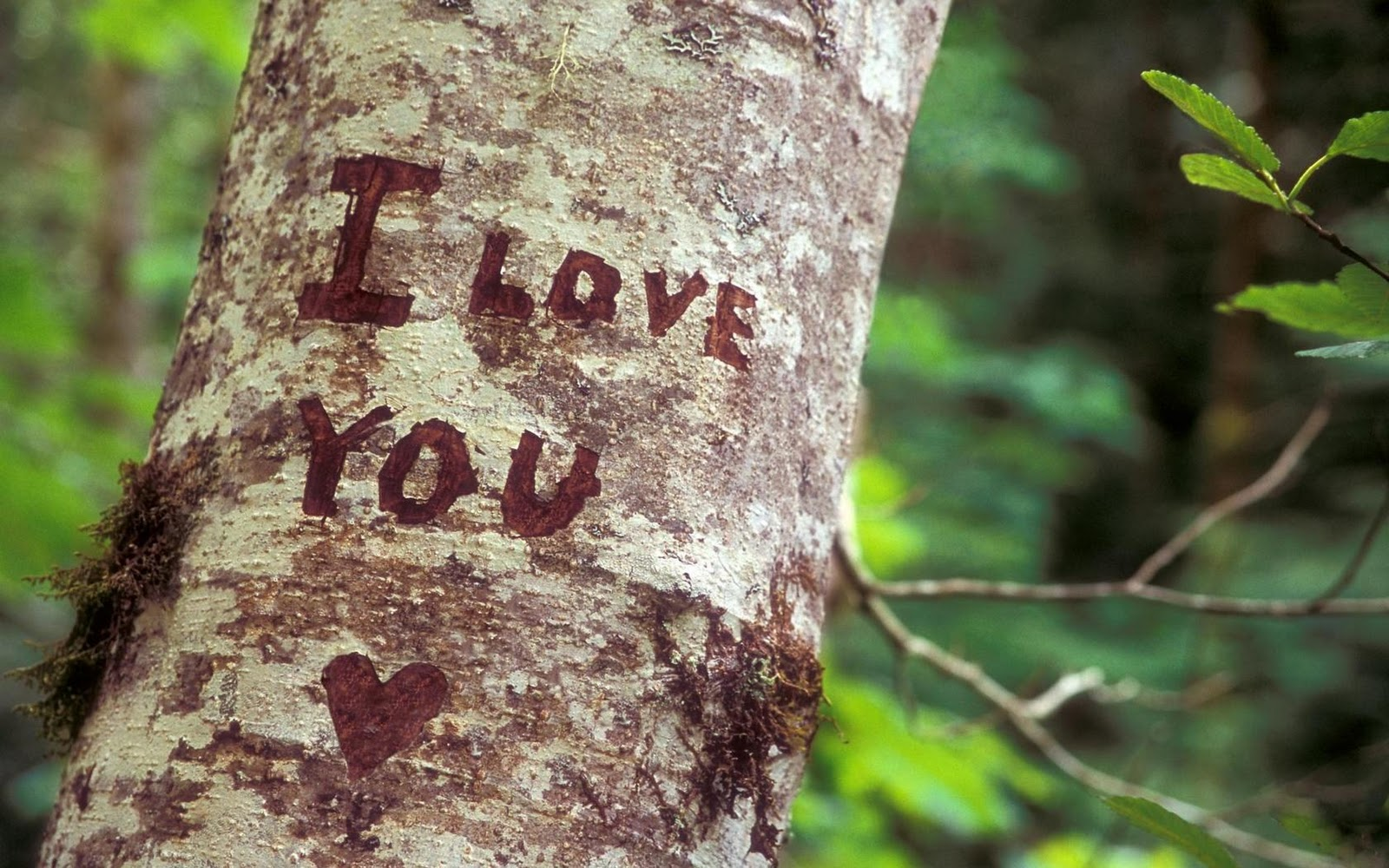 I love you heart tree nature hd wallpaper love - Love nature wallpaper hd ...