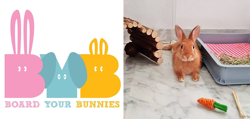Where to board Rabbits in Singapore