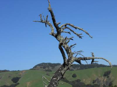 dead tree, death, loss of a loved one, spiritual awakening, renewal, spring time