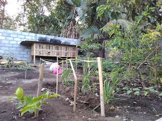 kebun belakang rumah