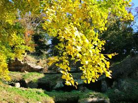 まんだら堂やぐら群の紅葉・黄葉