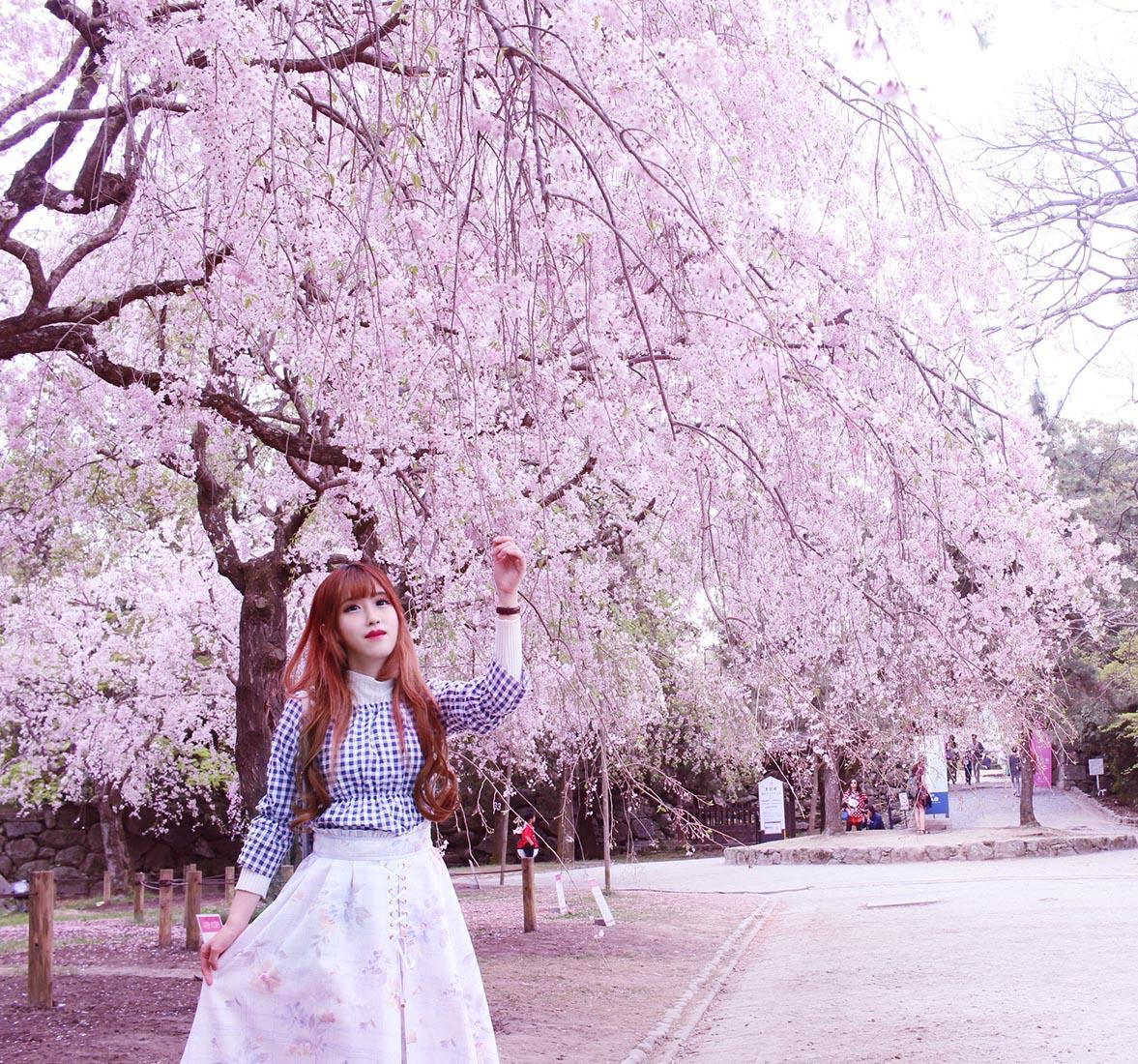 Top Things To Do In Langkawi Traveloka Travel Guide 2018: Fukuoka Travel Guide: Fukuoka Castle Cherry Blossom
