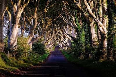 10 Terowongan Pohon Terindah Di Dunia