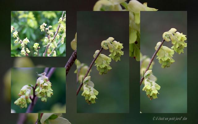 floraison jaune printanière