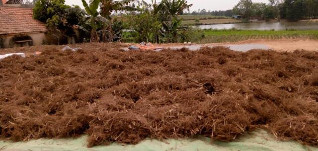 Tắm nước lá mùi già kết hợp vài cây thảo dược khác chiều 30 Tết tốt cho sức khỏe