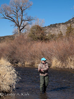 Fighting a trout on DePuy Spring Creek