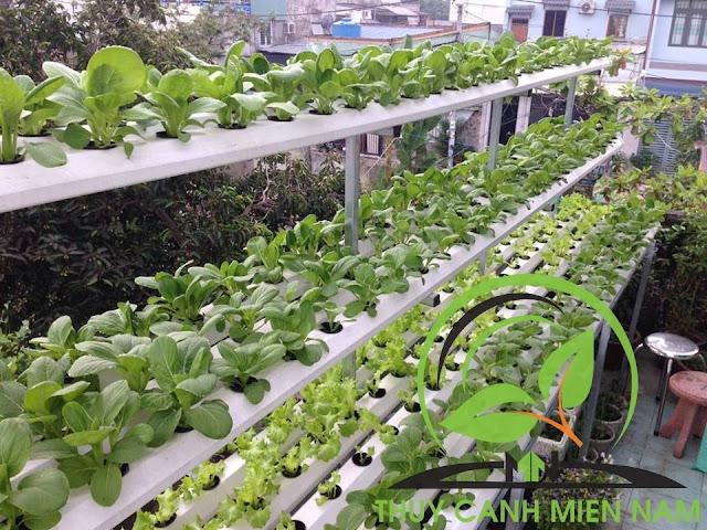 lắp đặt hệ thống trồng rau thủy canh tại q.9