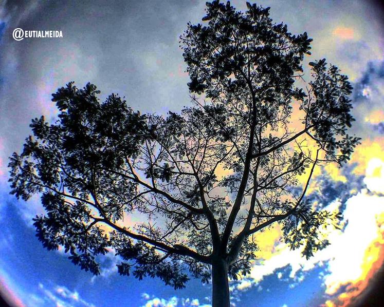 Fotografias do Celular