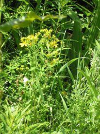 foraging, foraging saturday, fleetneedles forage, life on pig row