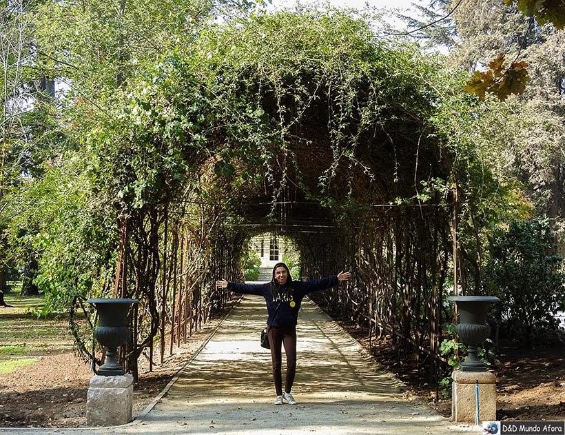 Túnel de folhas na entrada Vinícola Concha y Toro - Vinícolas chilenas