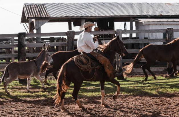 lidando-com-gado-fazenda-tropa-cavalo-boi