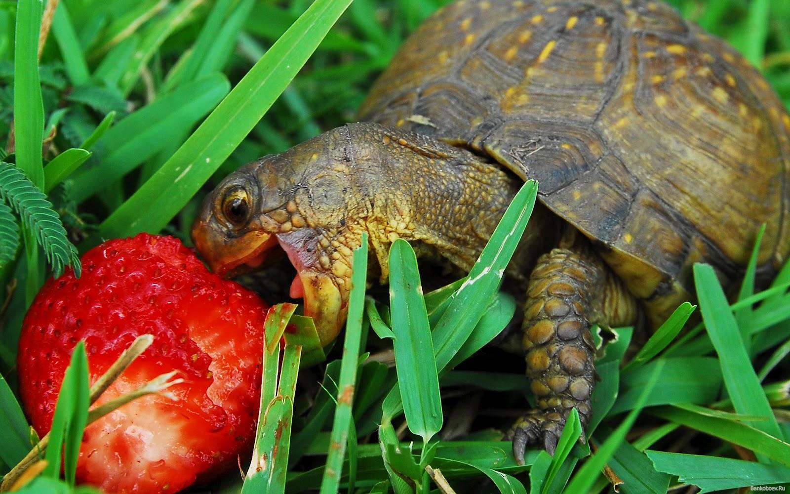 Mondo dei rettili alimentazione delle tartarughe di terra for Vasche da interrare per tartarughe