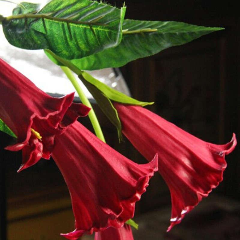 Red Trumpet Flower