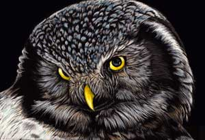 06-Owl-Allan-Ace-Adams-Scratchboard-Drawings-of-Wild-Animals-www-designstack-co