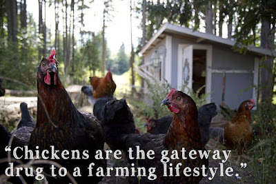 Chickens at a Homestead