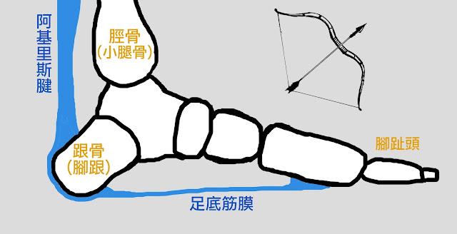 好痛痛 解剖列車 筆記 足底筋膜 阿基里斯腱 跟骨 腳踝 脛骨