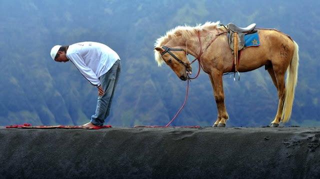 Belajar Taat Dari Kuda Yang Disebut Dalam Al-Qur'an