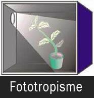 Gerak Fototropisme