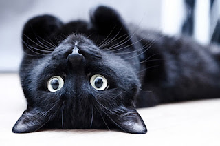 11 лайфхаков которые сделают жизнь с котом проще