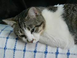 Gato mayor