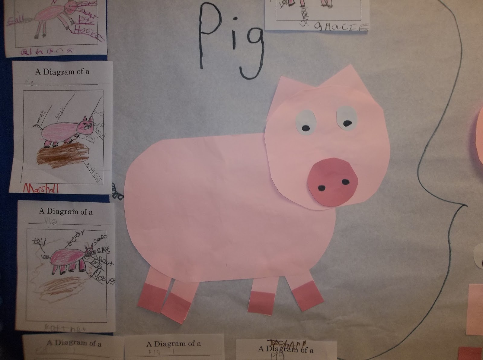 medium resolution of we created a class brace map that show the body parts of a pig then the students created and labeled their own diagram of a pig s body parts