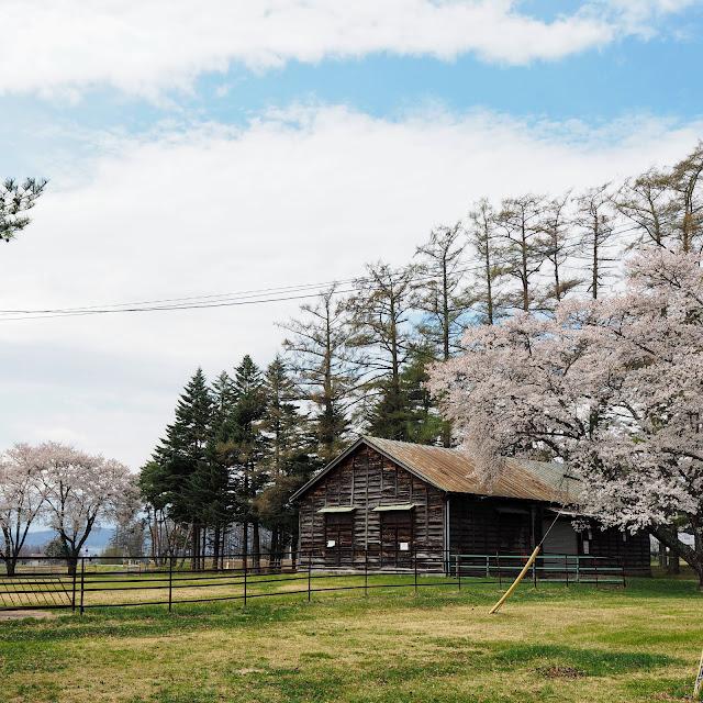 長野牧場 家畜改良センター茨城牧場長野支場 桜