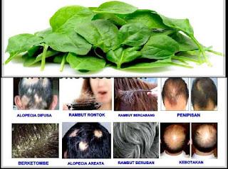 Bahan-Bahan Alami yang Ampuh Menumbuhkan Rambut Botak
