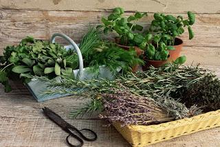 Быстро и не очень высушить листья для поделок и аппликацмй - советы и рекомендации http://prazdnichnymir.ru гербприй, как сушить растения для гербария, как сушить растения для поделок, как сушить растения для букетов,  Быстро и не очень высушить листья для поделок и аппликацмй - советы и рекомендации, Как быстро и правильно высушить листья для поделок и аппликаций, Воздушная сушка растений без подвешивания, Воздушная цветов сушка в вазе с водой, Воздушная сушка цветов с подвешиванием, как высушить цветы для букетп, как правильно высушить здаки, как правильно высушить здаковые ратения, Общие правила сушки цветоа, Объемная сушка цветов в обертке, Гигроскопическая вата, Парафинирование живых цветов и листьев, Порошковая или объемная сушка растений, Для каких цветов нужна порошковая сушка, Сохранение растений в глицерине, Сушка растений, листьев и цветов в книгах, Сушка растений под прессом, Экспресс-сушка листьев утюгом, Экспрессс-сушка цветов в микроволновой печи, Общие правила сушки для лучшего сохранения формы и окраски лепестков, /