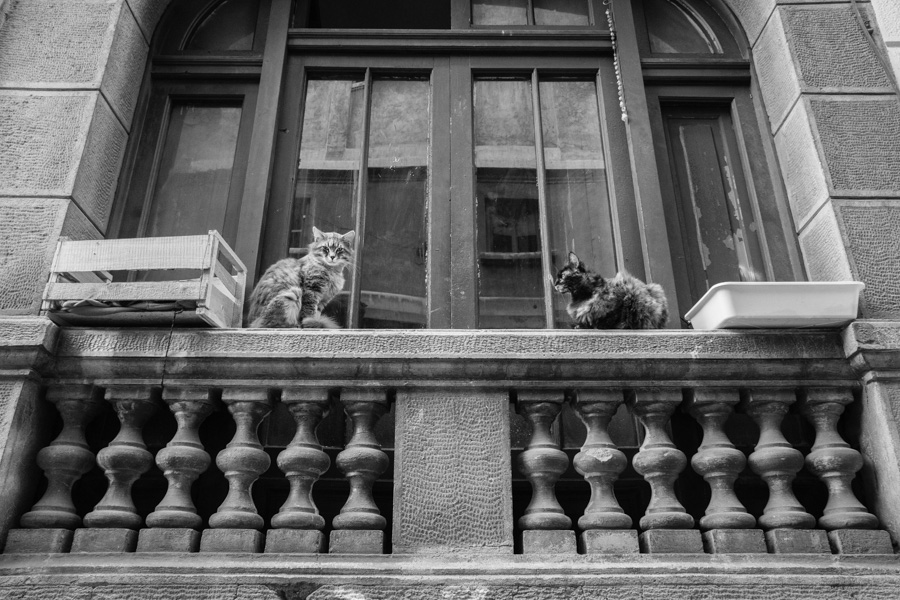 Cats in Windows | Barrio Concha y Toro