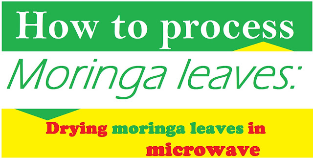 drying moringa leaves in microwave