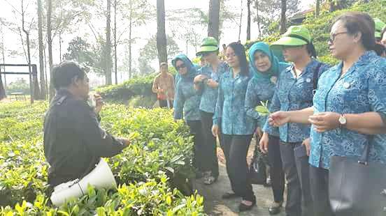 Staf Perusahan memberikan penjelasan terkait tanaman teh milik perusahan pemerintah itu.