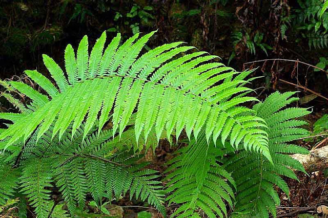 green ferns in forest