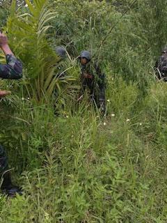 Yonif 431/SSP di Papua terima Pistol Api Rakitan dan Ganja